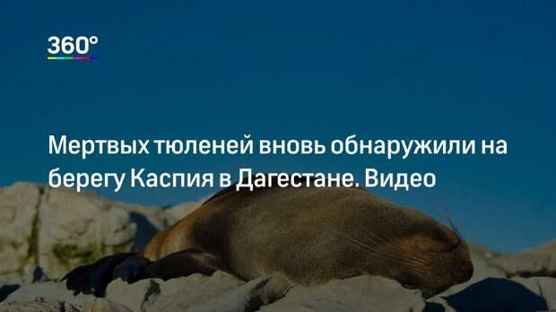 Мертвых тюленей вновь обнаружили на берегу Каспия в Дагестане. Видео
