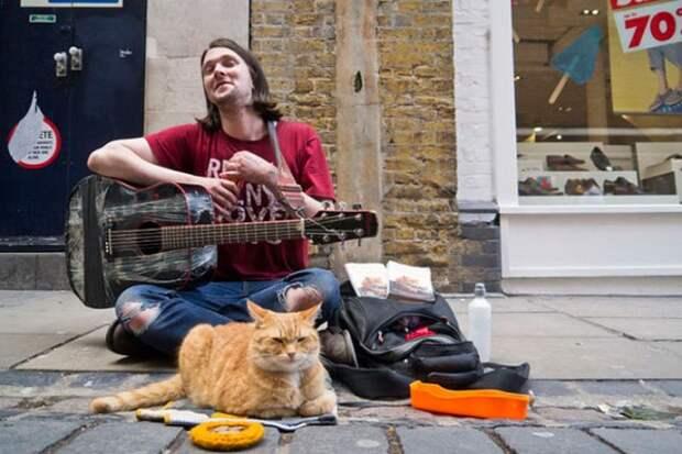 Боб: Удивительный рыжий кот!
