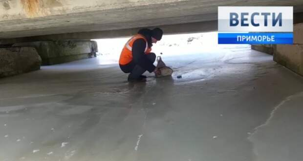 В Приморье железнодорожники спасли кота, которого выбросили в мешке под мост