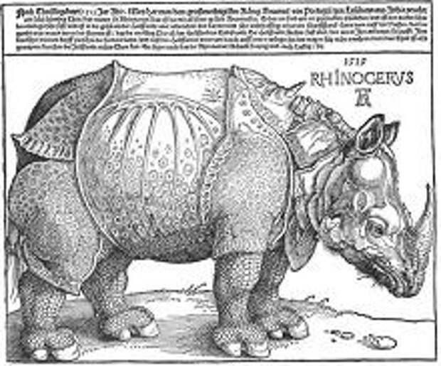 Носорог. Гравюра Альбрехта Дюрера. 1515 г.