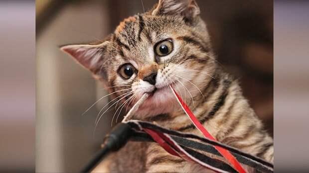 Приколы с животными 2019 #9 Смешные приколы с котами 2019. Ржака ...