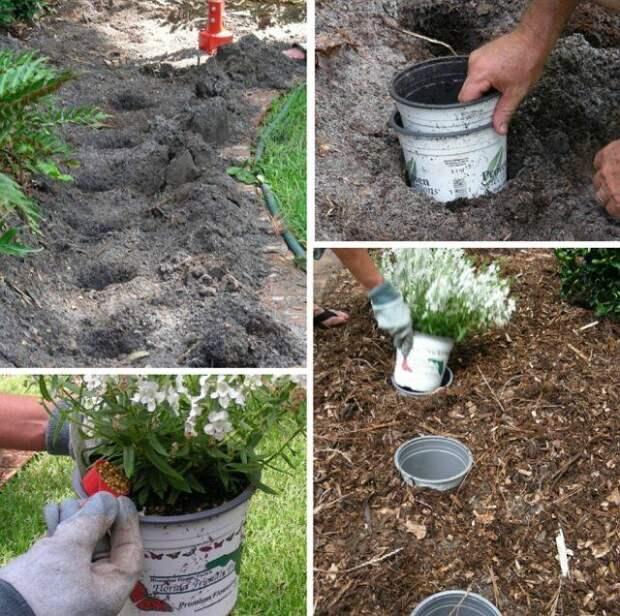 Садовые хитрости для продвинутых дачников