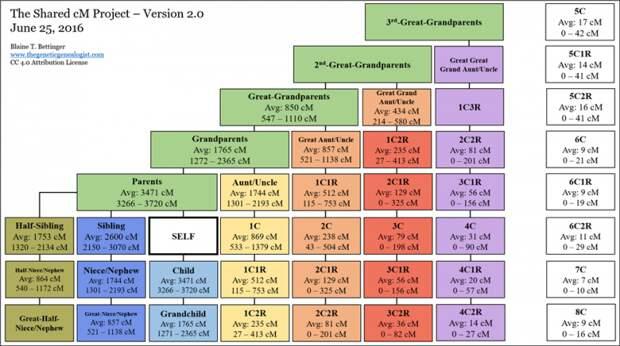 схема родства по результатам ДНК теста