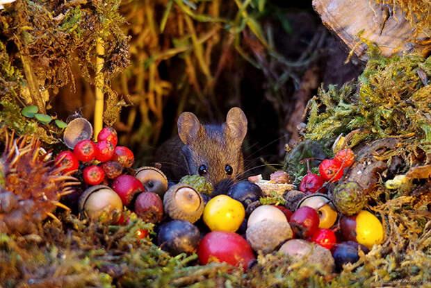 У мышек в саду Саймона жизнь - настоящая сказка.