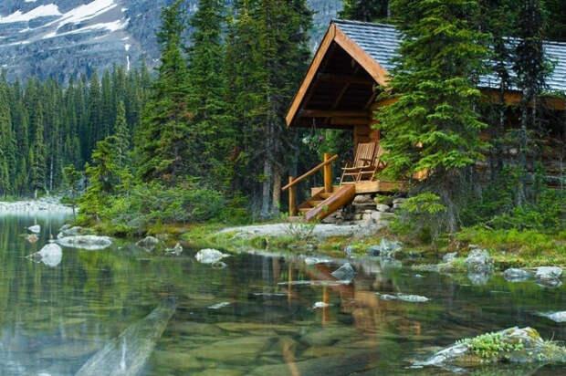 Каким может быть дом в лесной чаще