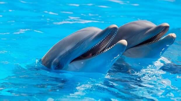 Правительство РФ предложило ввести запрет на вылов китов и дельфинов
