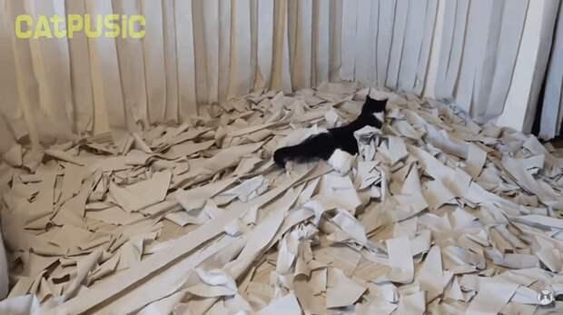 Вжух! Пусик, бумага, видео, животные, кот, рулоны, хозяева