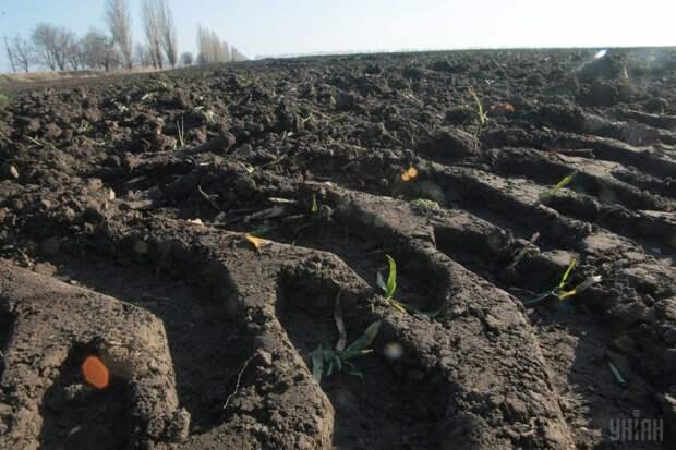 По результатам опроса 64% украинцев против введения рынка земли в Украине, 79% против продажи иностранцам