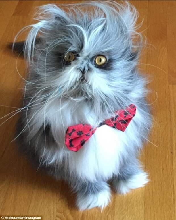 У Атчума есть собственный сайт  животное, кот, собака, спор
