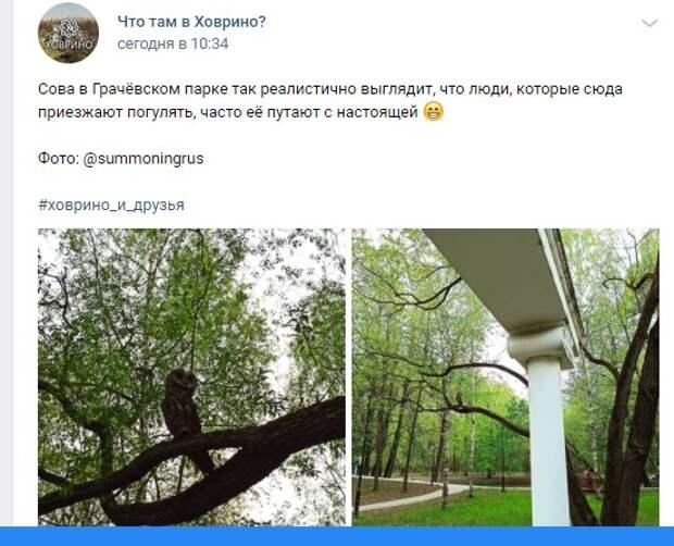 Фото дня: «сову» в Грачевском парке часто путают с настоящей