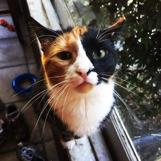 Уникумы! животные, забавно, коты, кошки, неожиданно, окрас, окрас кошек, фото