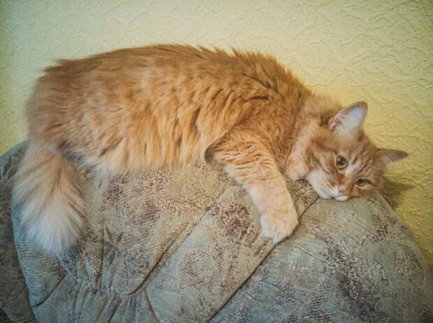 Алиска обнимает диван.