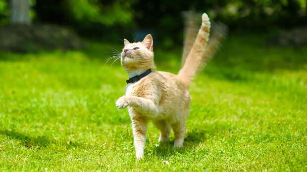 Хвост виляет кошкой: 7 подсказок о настроении питомца