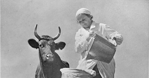 5 интересных фактов о советской молочке, о которых гражданам не разглашалось