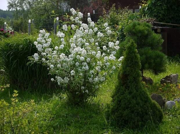 Растения - осушители грунта: что посадить на участке, чтобы избавиться от лишней влаги