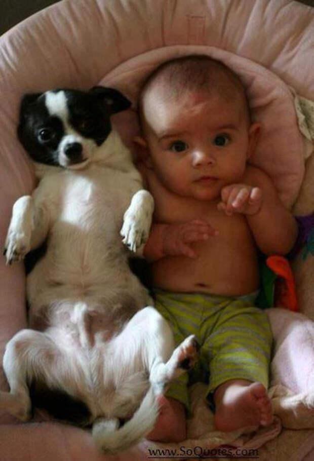 дети должны расти с домашними животными (11)