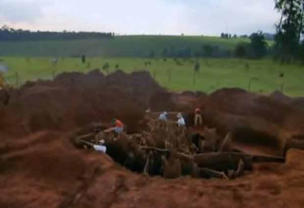 Учёные раскопали колоссальный подземный город муравьёв - видео-05