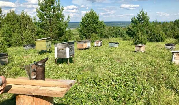 Карантин по нозематозу пчел установили в Кизнерском районе Удмуртии