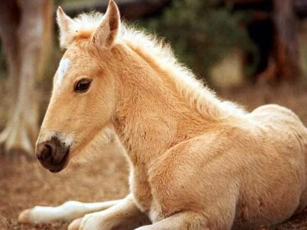 Любители лошадей сюда. - Блог - Страница 22 - Привет.ру