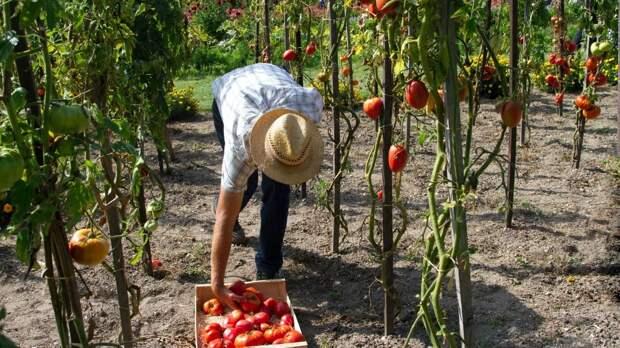 Гериатр рассказал, как пожилым людям сохранить здоровье во время работы в огороде