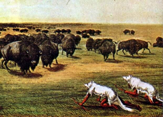 Ежегодная охота на бизонов