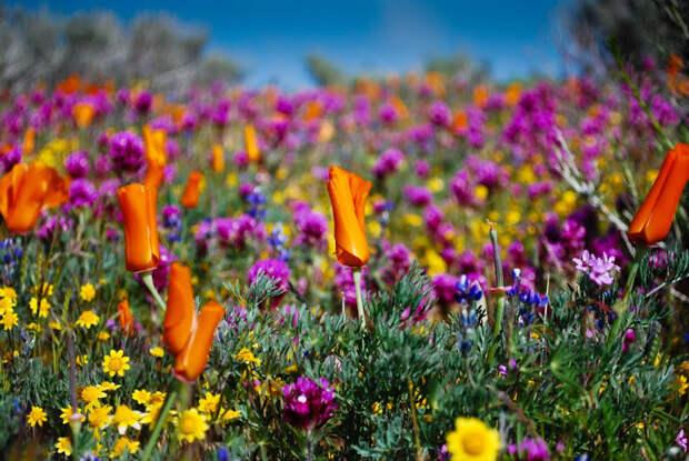 национальный парк долина цветов в Индии