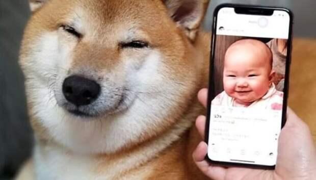 Эмоциональный сиба-ину стал звездой мемов про разницу поколений