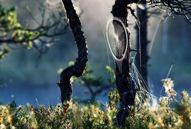 Прекрасные фотографии природы,подборка для души ;) картинки, лес, природа, фото, цветы