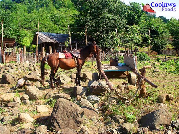 деревушка в грузинских горах