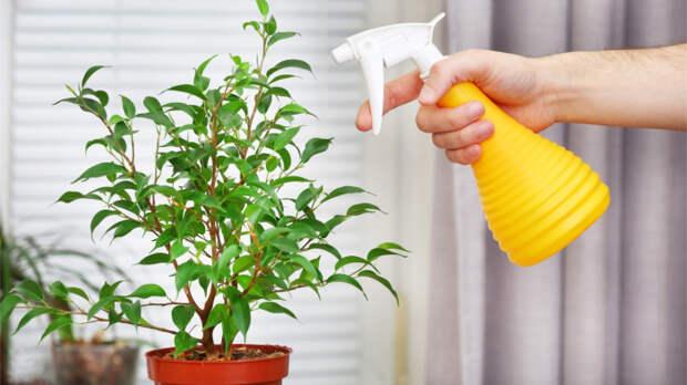 Некоторые ошибки за ошибки вовсе не считают, что ведет к гибели растений. / Фото: v.img.com.ua