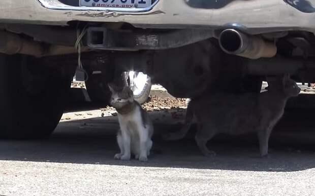 Кот под машиной