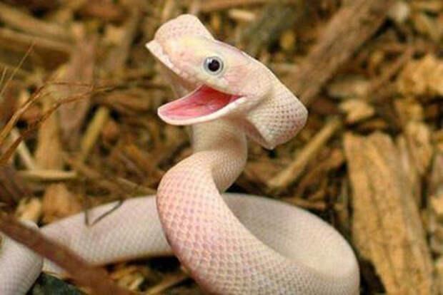 милые животные  у которых не получилось выглядеть устрашающе (11)