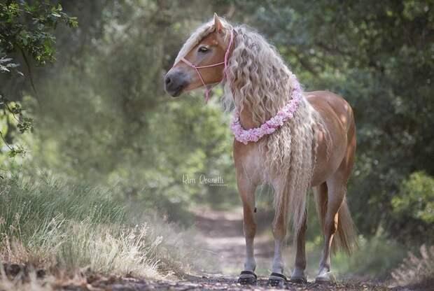 Длина гривы Шторм — более метра. Чтобы отрастить такую и держать её в опрятном состоянии, потребовалось 6 лет голландия, девушка, животные, красота, лошадь, фото, шевелюра