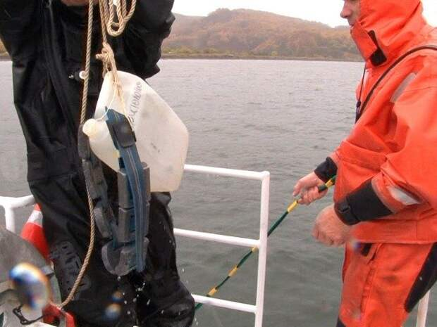 На Камчатке обнаружили еще два места массовой гибели морских животных