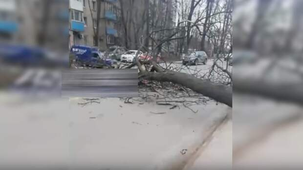 Ветер адский: дерево рухнуло надорогу наВересаева вРостове