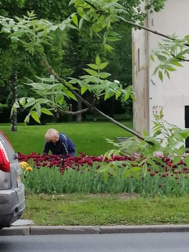 Цветники в Линаозове не должны страдать от вандалов – управа