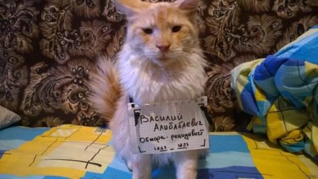 рыжий кот с табличкой на груди