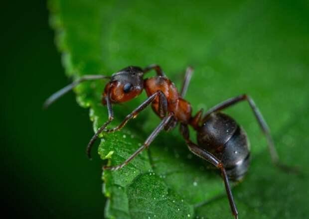 Как отпугнуть насекомых этим летом