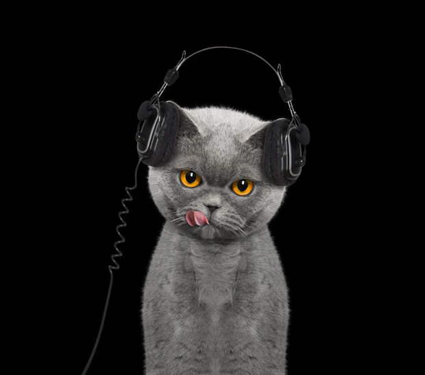 Кошачье соло. Злобно мяукающий котик объединил музыкантов из разных стран