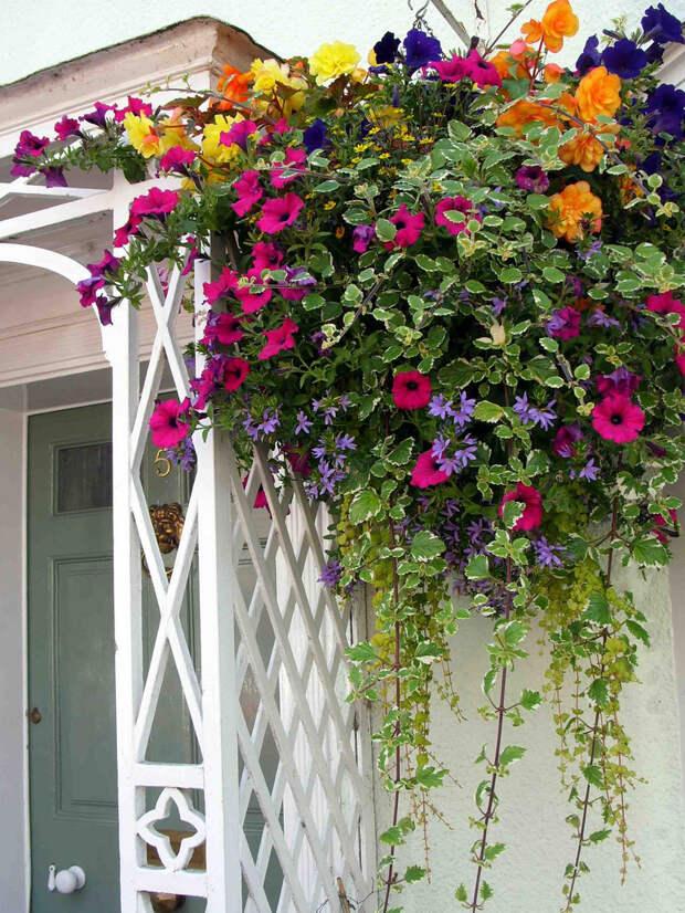 Идеи контейнерных садов