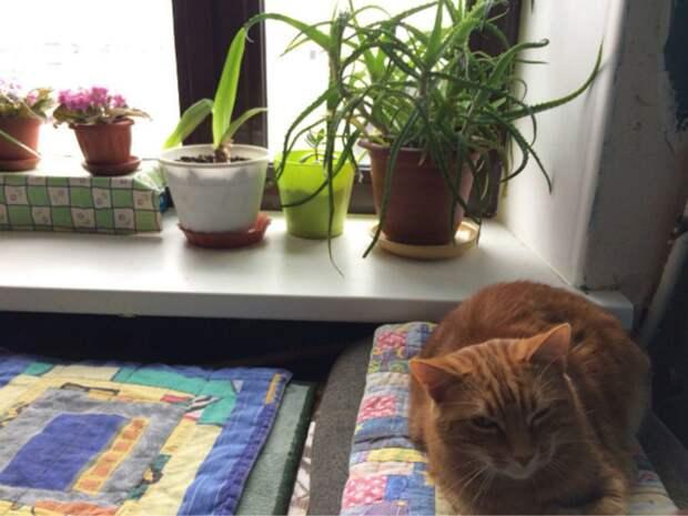 Госдума запрещает нарушать покой соседей, в том числе в съемных квартирах