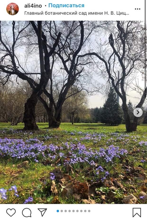 Фото дня: пробуждение цветов в Ботаническом саду