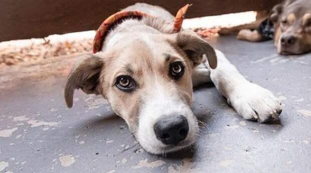 Пёс бродил по бензозаправочной станции, мечтая о том, что его заметят