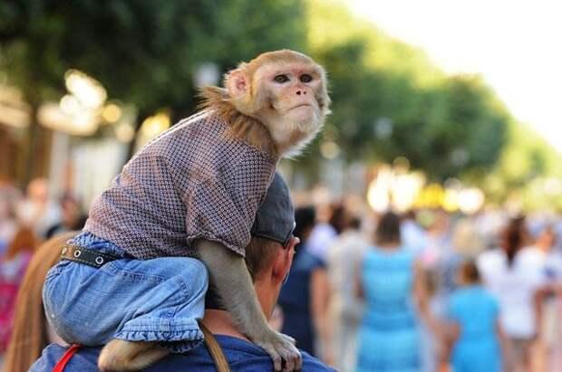 обезьянка на плече у мужчины