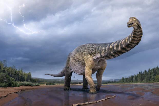 Останки нового вида крупнейшего динозавра обнаружили в Австралии
