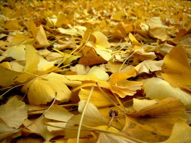 Осень. (Tamaki Sono)