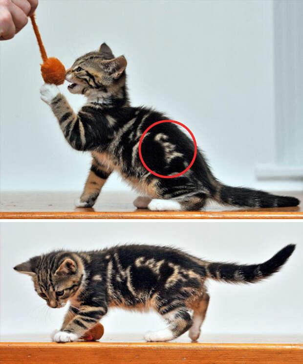 """Котенок с надписью """"cat"""" животные, забавно, коты, кошки, неожиданно, окрас, окрас кошек, фото"""