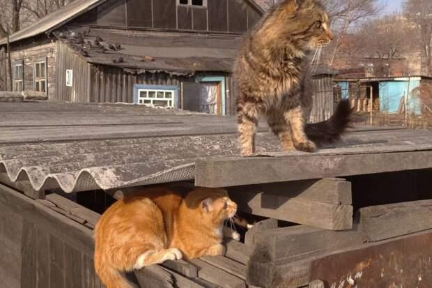 Фото котиков и не только: приморский фотограф снимает на улицах жизнь замечательных зверей
