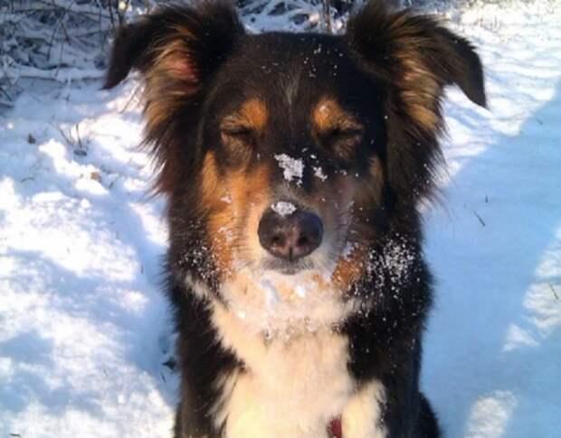Как повела себя собака, которую впервые пустили погреться домой в сорокаградусный мороз