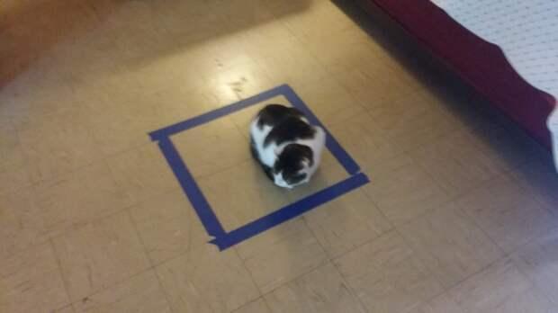 Кошки любят прятаться как в настоящих, так и в воображаемых коробках